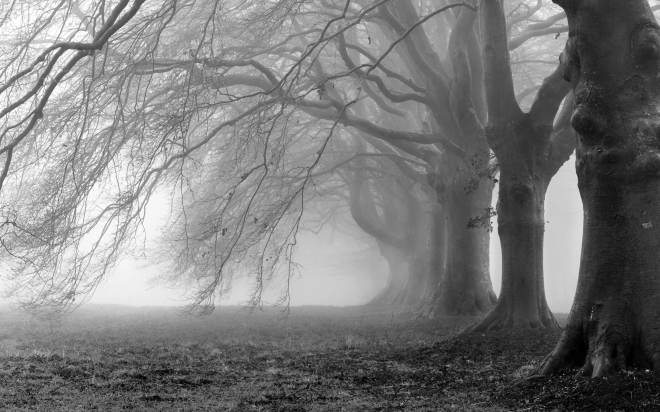 Creepy-Trees-Fog-Background